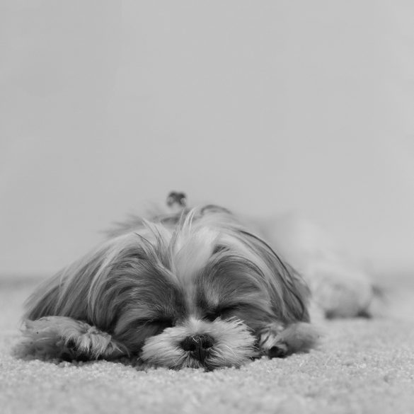 The 7 benefits of living with a dog